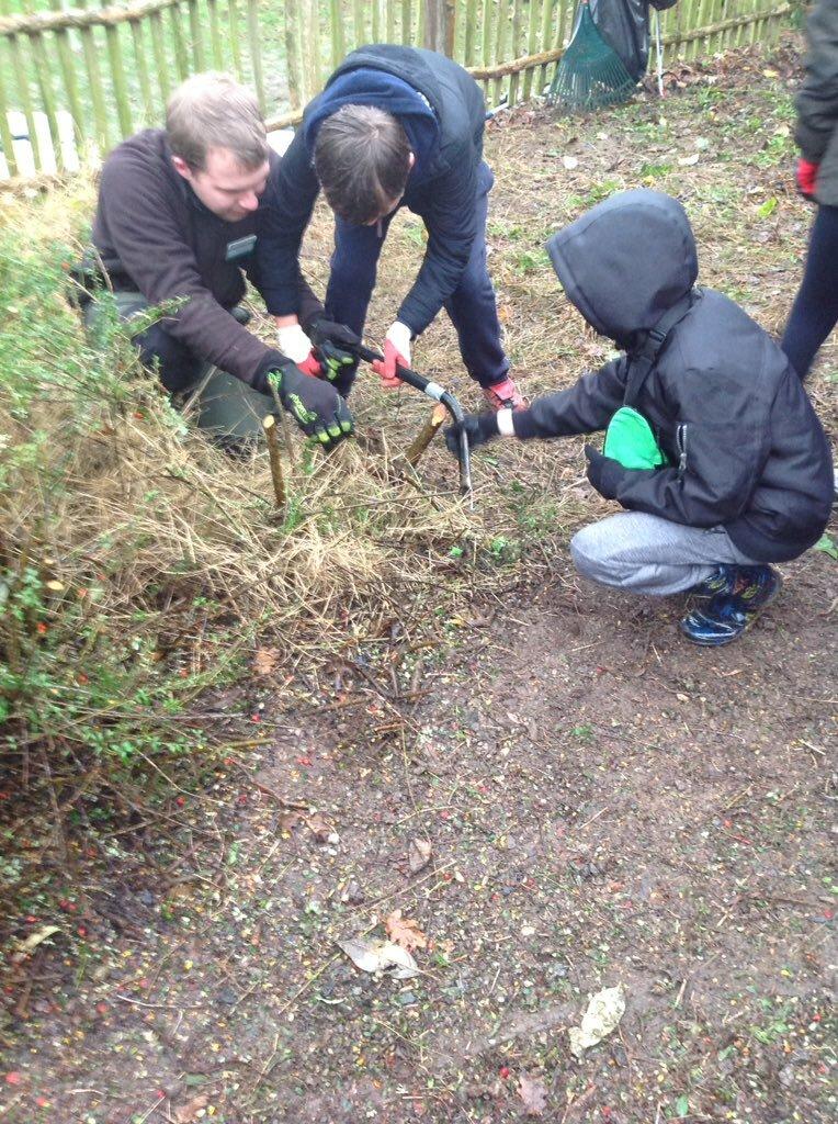 Tree Planting 16