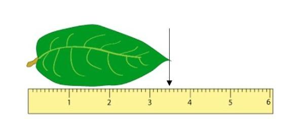 Measuring_in_cm.JPG