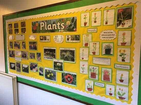 Plants (Year 1)