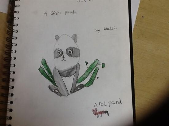 Panda3 (11)