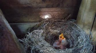 Baby_Birds.jpg