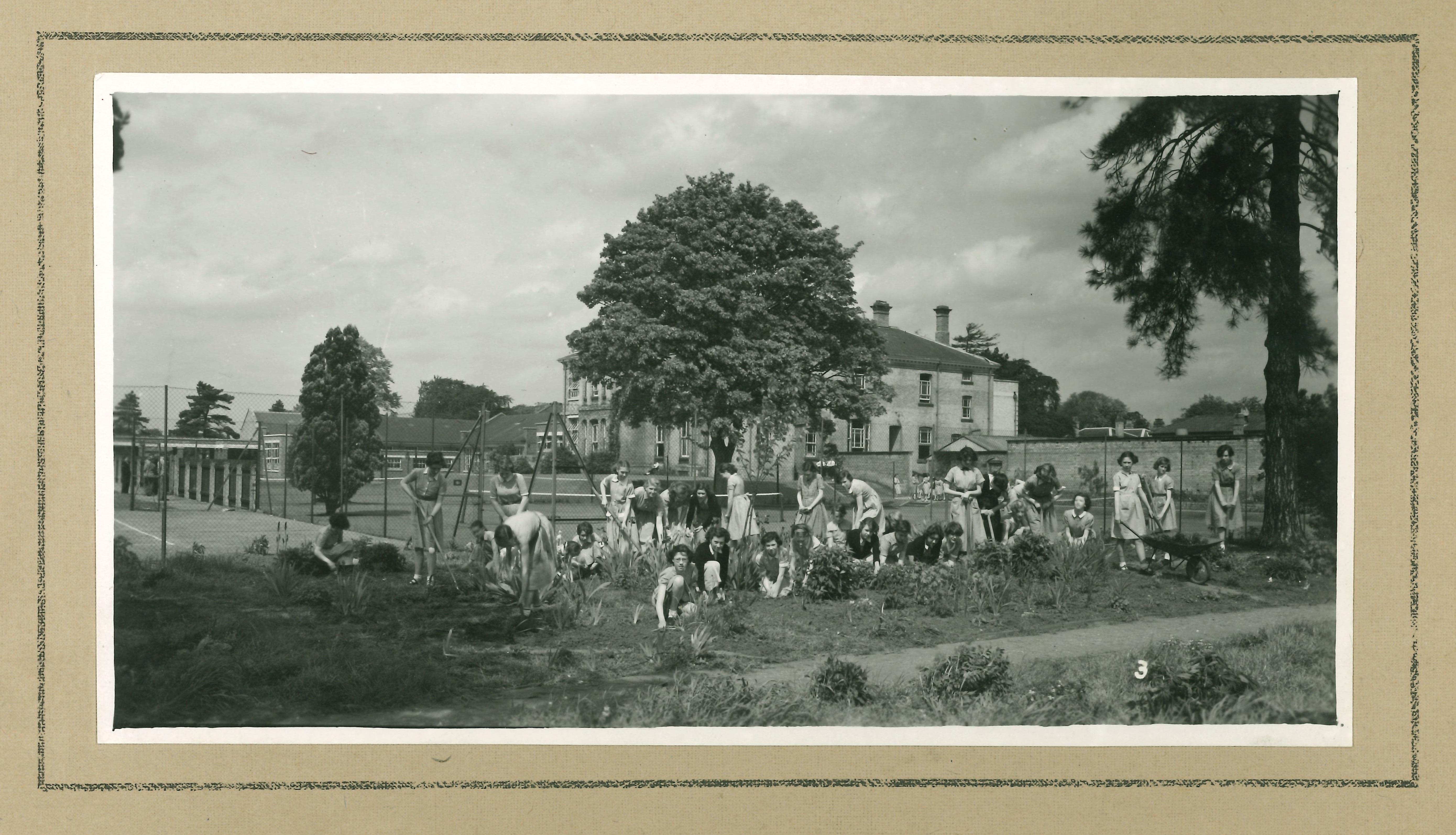 Photo Album 1954 garden1