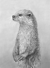 otters_picture.jpg
